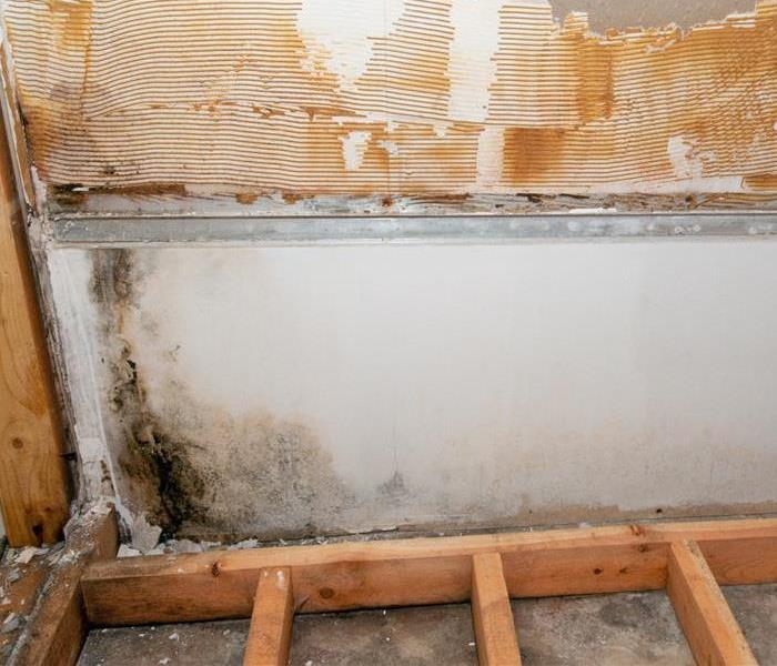Why SERVPRO How SERVPRO Locates and Eliminates Hidden Mold in Your Jacksonville Home