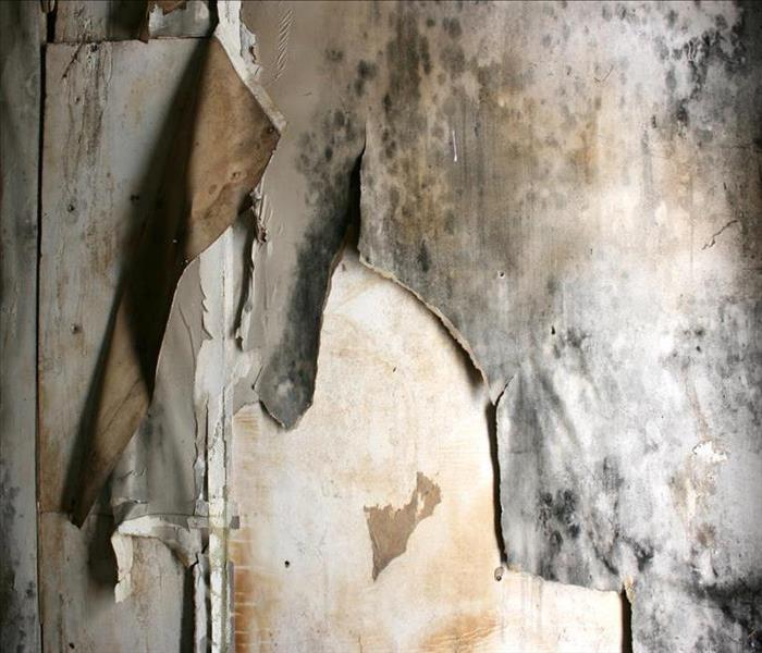 Mold Remediation Mold Damage Remediation Services in Jacksonville