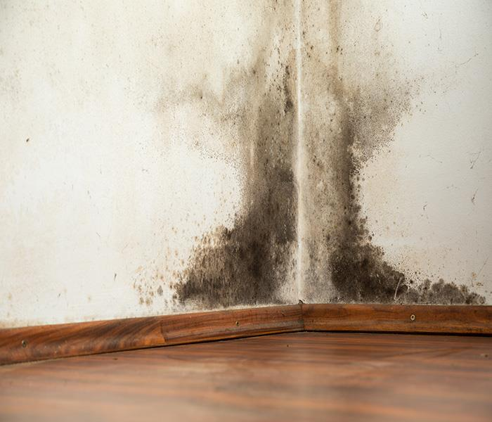 Mold Remediation Preventing Mold Damage in Your Residence