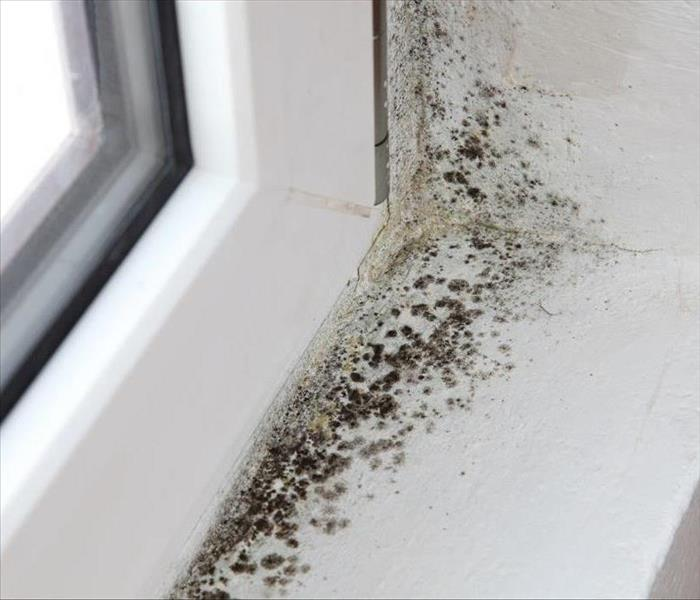 Mold Remediation Is Your HVAC Or Other Climate Control System Contributing To Mold Damage In Your Jacksonville Home?