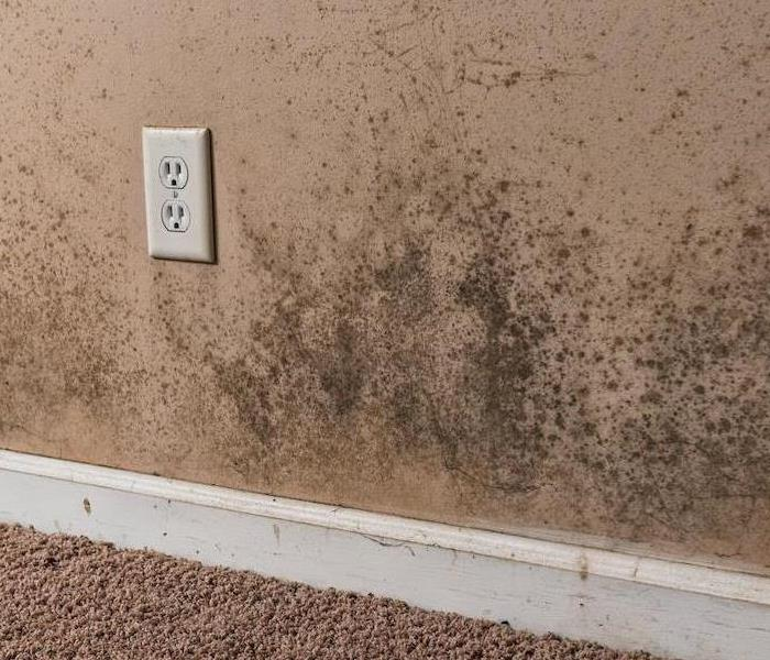 Mold Remediation Cleaning and Removing Mold From Town Center Homes