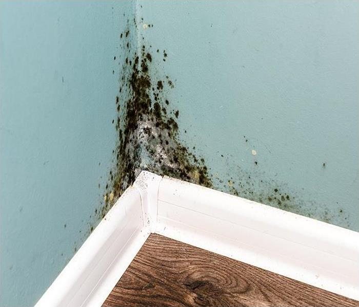 Mold Remediation The Advantages Of Hiring Our Team To Remediate Your Mold Damage Issue In Jacksonville